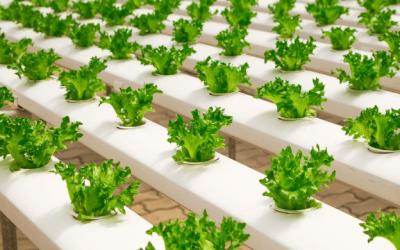 Business ideas for 2020: Urban Farming